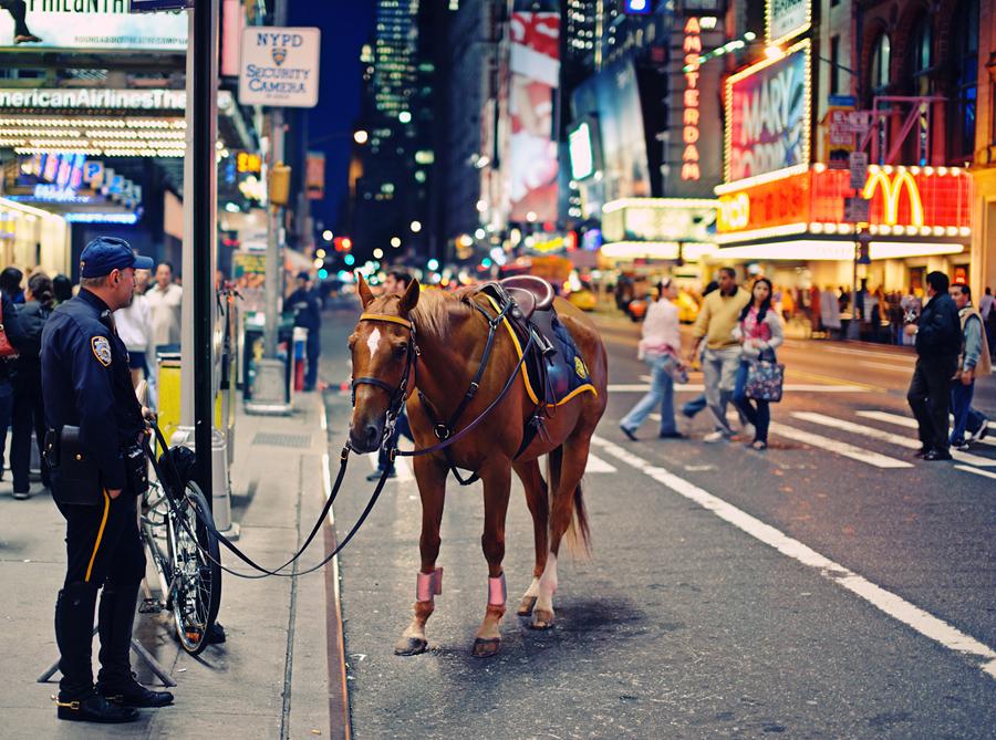 Нью-Йорк. История лошади.