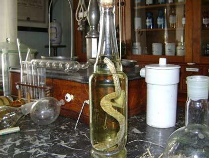 Банка с заспиртованной змеей
