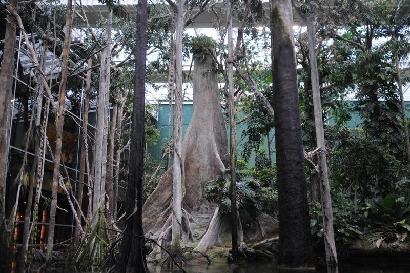 Отдел «Заболоченный лес»