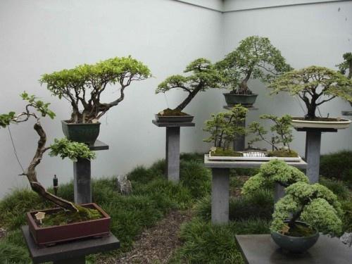 Музей бонсая Такаги