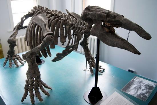 Палеонтологическая коллекция музея