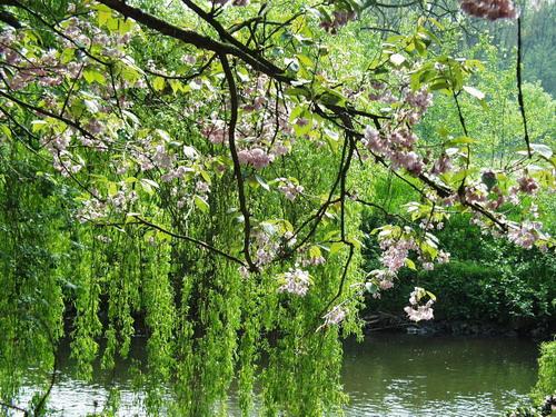 Розовые лепестки цветущих деревьев
