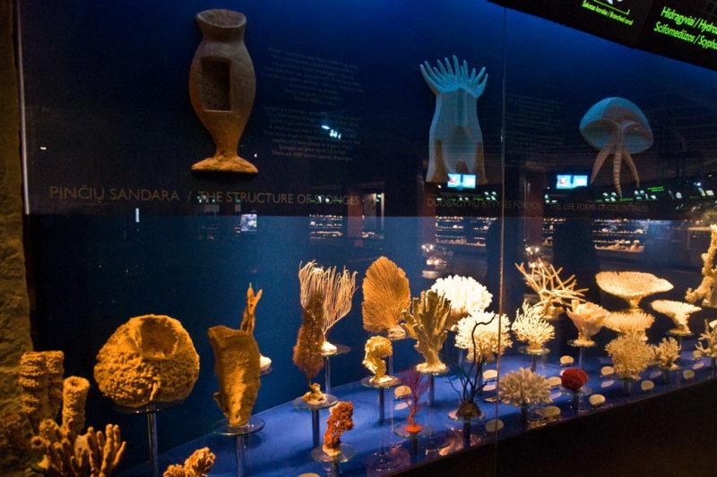 Коллекция морских раковин