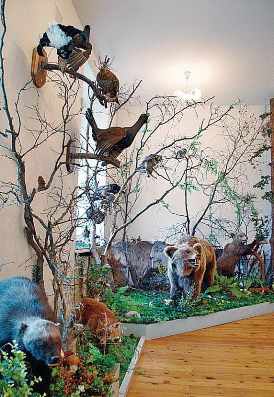 Экспозиционный зал, посвященный флоре и фауне