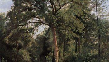Опушка леса в Виль д`Авре