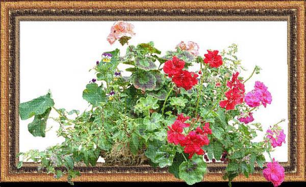 Цветы, Кальницкий Александр Викторович