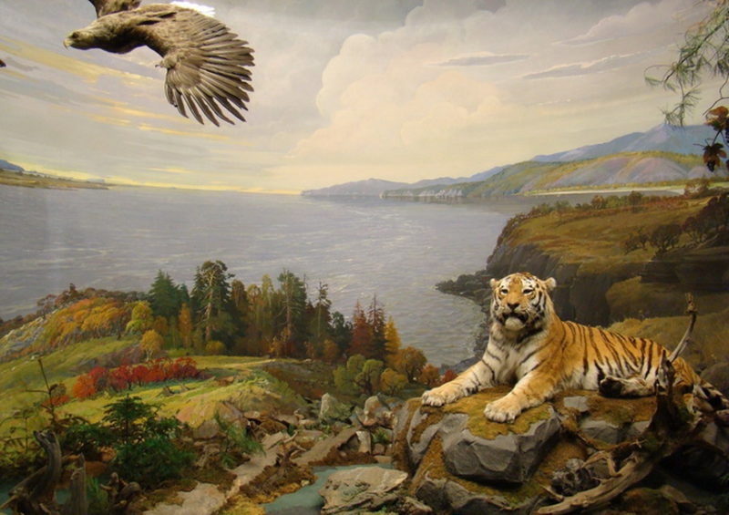 Диорама, иллюстрирующая дикую природу Хабаровского края